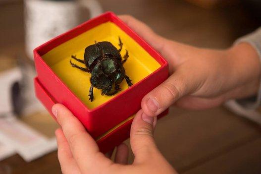 O Escaravelho do Diabo | Primeiras imagens da adaptação cinematográfica
