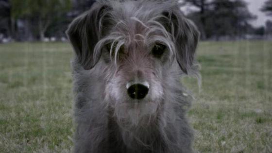 A vingança sanguinária do cachorro de John Wick